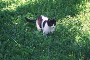 A picture of Lemon standing in the grass, summer 2001
